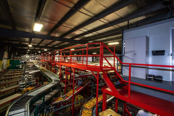 View of complex network of conveyor carrying tomatoes in the packing facility