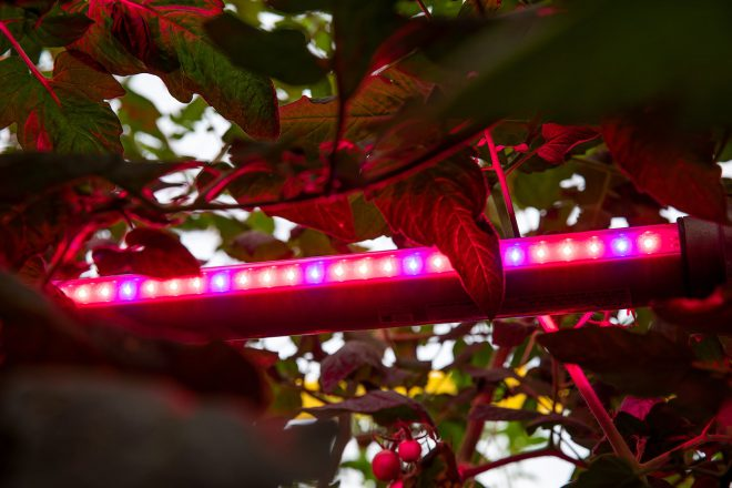 Special lightening in the green house for improved crop growth